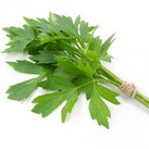 Levisticum officinalis 'Lovage'