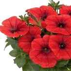 Potunia™ Plus Red